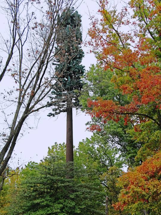 tree-pole01