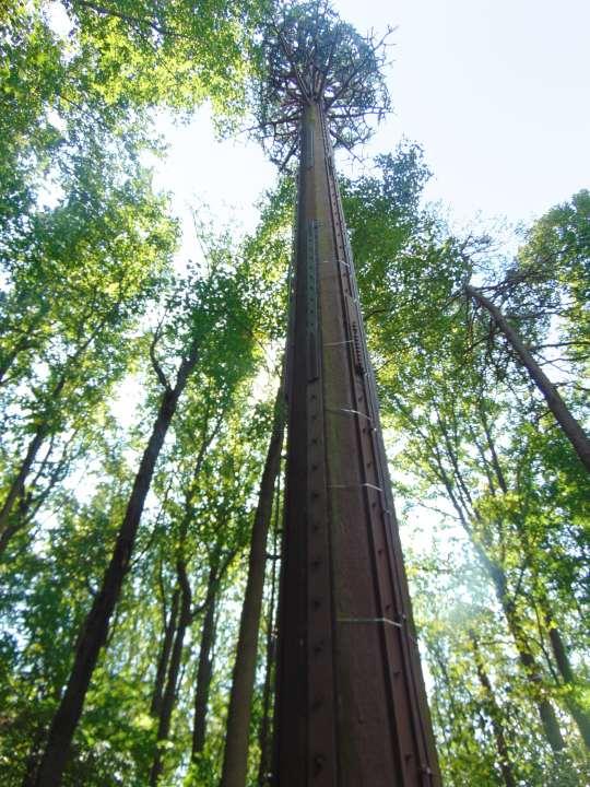 tree-pole02